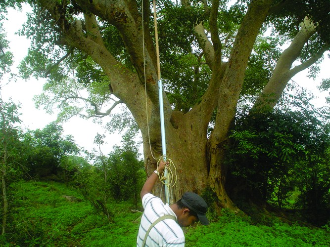 Zee Ahmed collecting scale insects