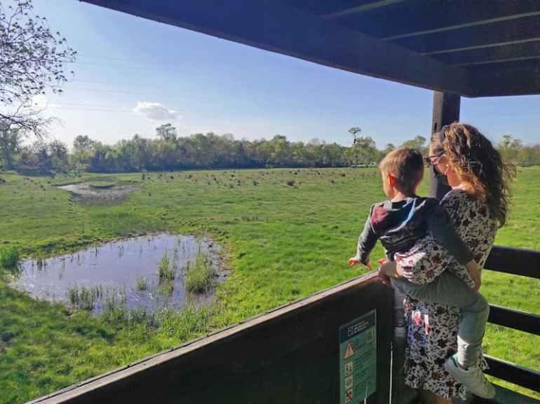 Ver aves y cigüeñas en els Aiguamolls de l'Empordà
