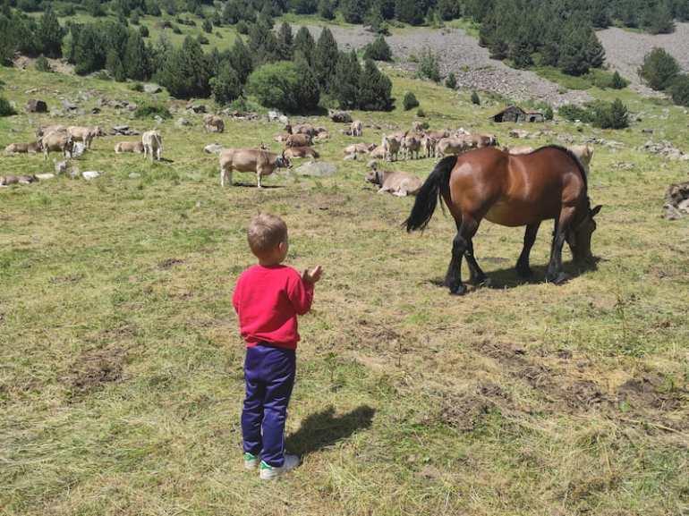 Caballos y vacas cerca de Ordino-Arcalís