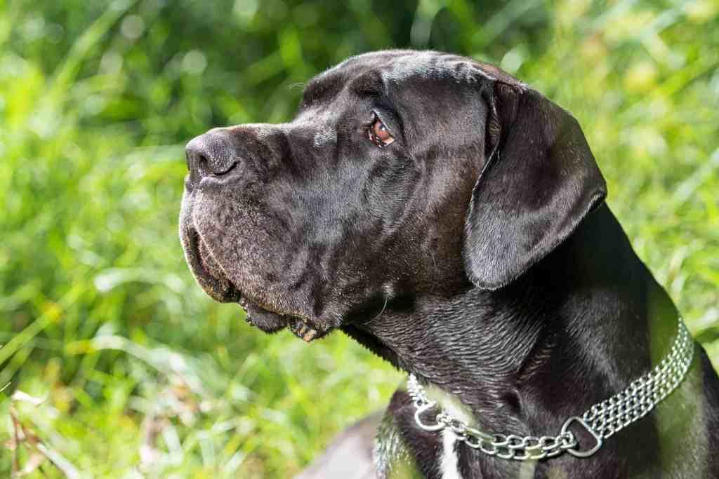 Nothing illustrates loyalty better than a good doggo