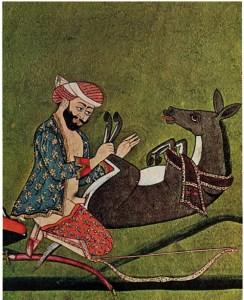 zoofilia-islam