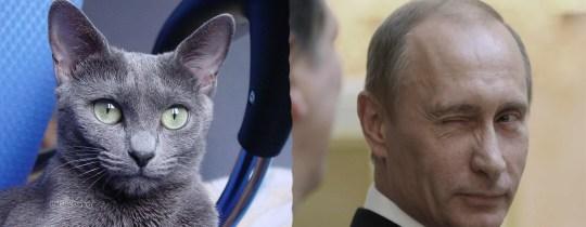 ruso-y-putin
