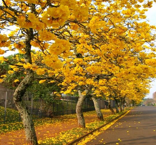 O tempo – Outono