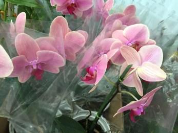 Pátio Pinda recebe mostra de orquídeas