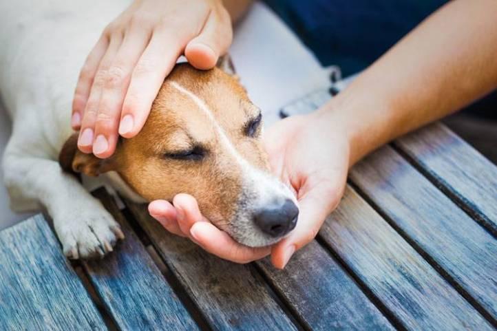 Resultado de imagen para primeros auxilios para mascotas
