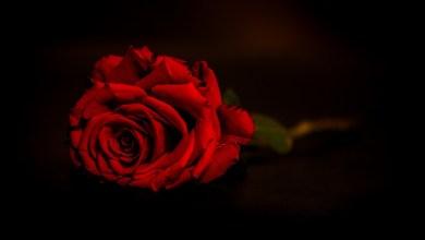 Photo of Trovas de Amor – Gilvan Carneiro da Silva