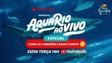 Photo of AquaRio promove live sobre a vida dos Tubarões nesta terça