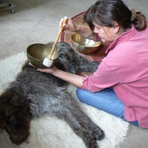Klangmassage mit Tieren