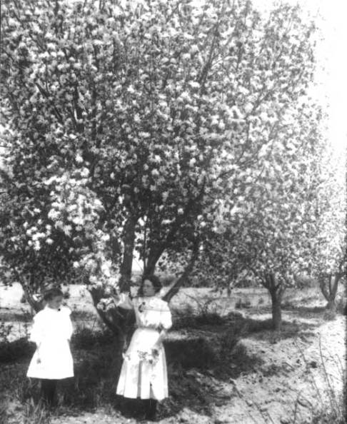 Two girls and an apple tree in Niwot, Colorado, 1909. Photo credit: Boulder Historical Society/Museum of Boulder, on permanent loan to the Carnegie Library for Local History. Orchard at Colorado Chautauqua in Boulder, circa 1907. Photo credit: Boulder Historical Society/Museum of Boulder, on permanent loan to the Carnegie Library for Local History.