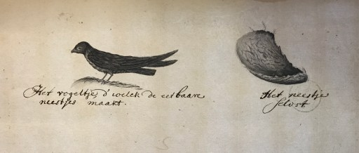 An illustration of a black swallow on the left, and its nest on the right.