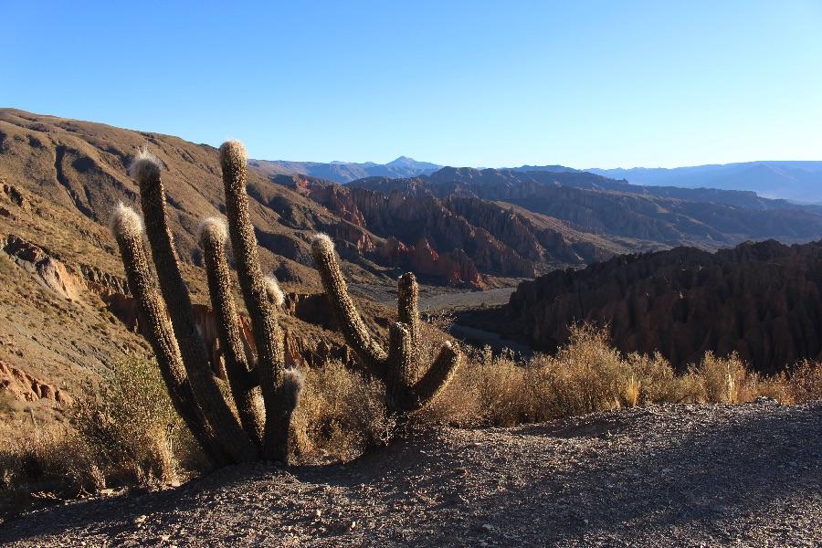 sud-lipez-cactus