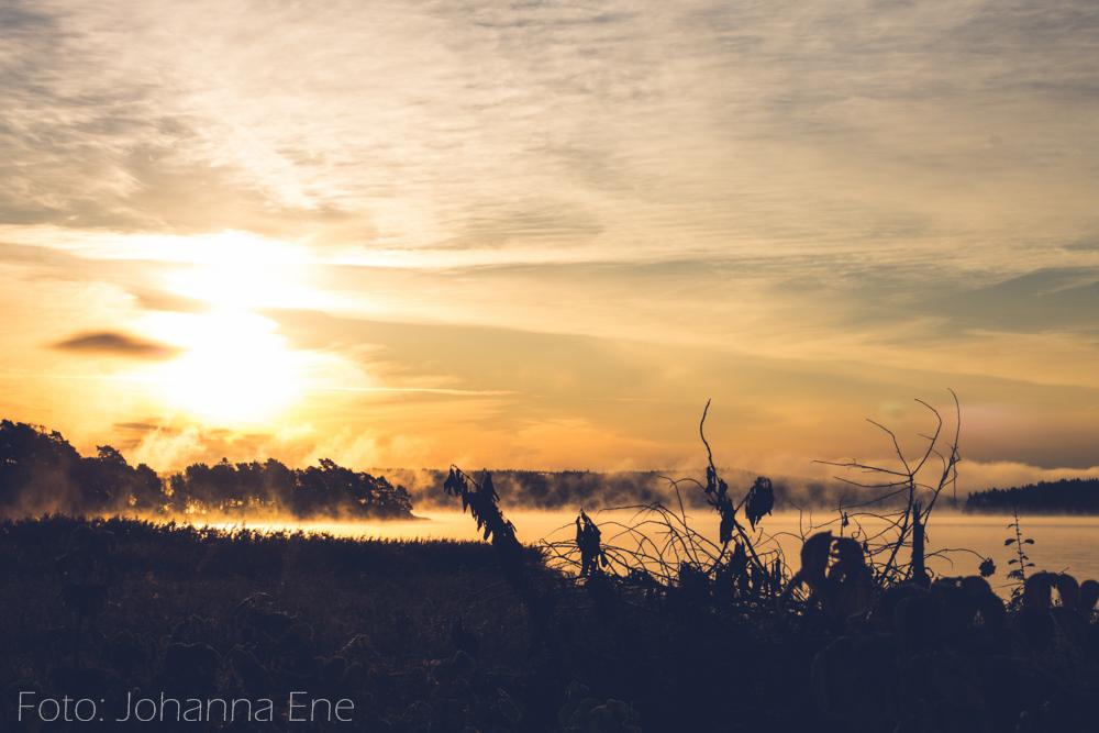 Soluppgång över sjö på hösten.