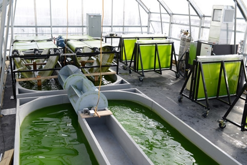 Don't Throw That Out! Turning Dairy Waste into Microalgae Products.