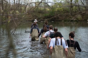 Students and a professor wade through a pond surveying turtles