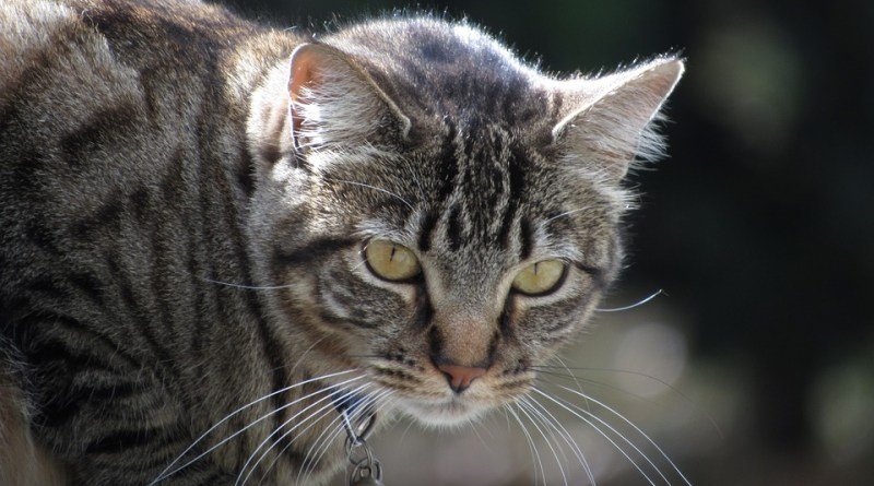 Fantastic felines and how to be a responsible pet owner