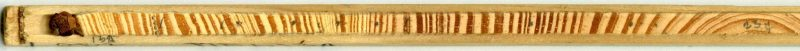 A small pencil-shaped section of wood from a tree core. Tiny dark and light lines run the length of it making up each yearly tree ring.