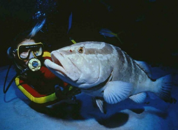 Moving Closer to Plenty Of Fish In The Sea: Gradual Recovery Of A Critically Endangered Fish Species