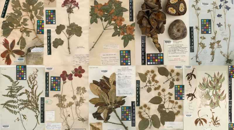 Dead plants breathe new life into botanical research