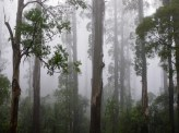 Dandenong Ranges National Park, Victoria