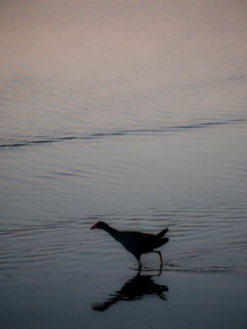 Lake Joondalup, Perth, WA
