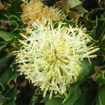 Wildflowers at Point D'Entrecasteaux, D'Entrecasteaux National Park