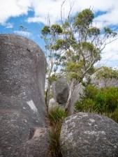 Granite Boulders, Castle Rock, Porongurup National Park