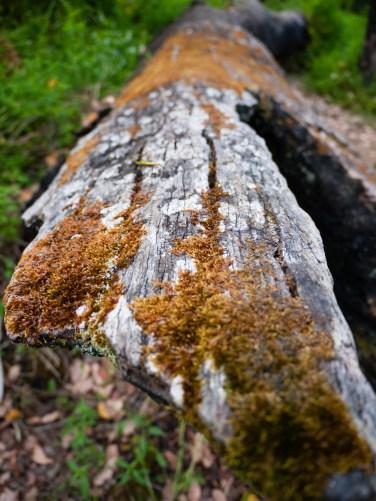 Moss on Fallen Trees, Castle Rock, Porongurup National Park