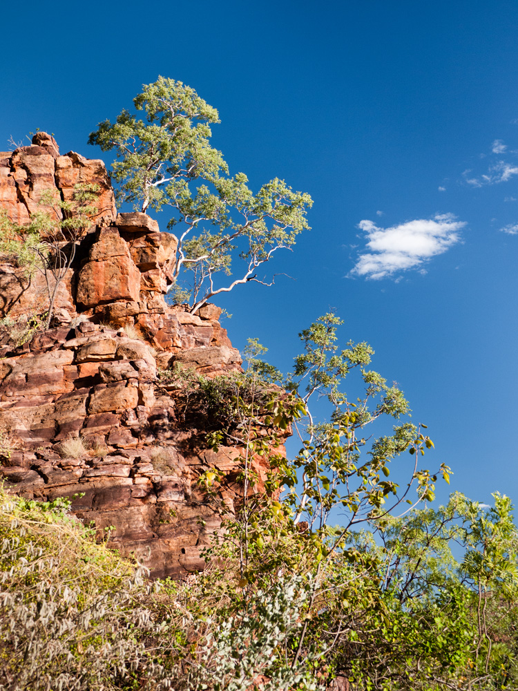 Island Stack, Lawn Hill National Park, Queensland