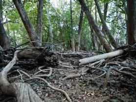 Cascades, Lawn Hill National Park, Queensland