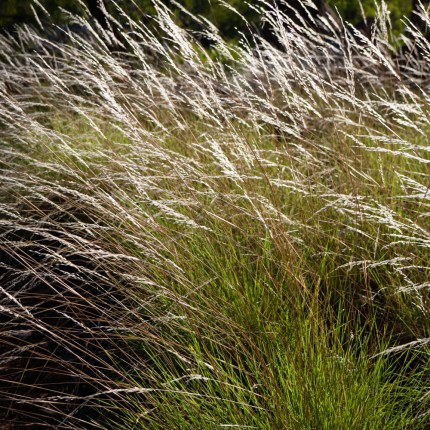 Grasses, Southern Lost City, Limmen National Park, Northern Territory