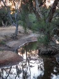 Shrinking creek levels in the summer heat, Wandering, Western Australia