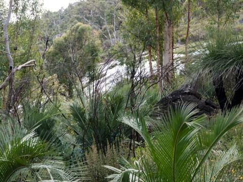 Regeneration after the burn, Mount Cooke, Monadnocks Conservation Park