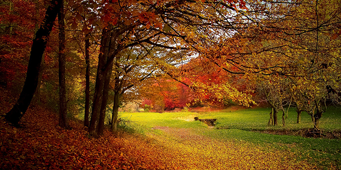 Leaves changing colors and falling in autumn