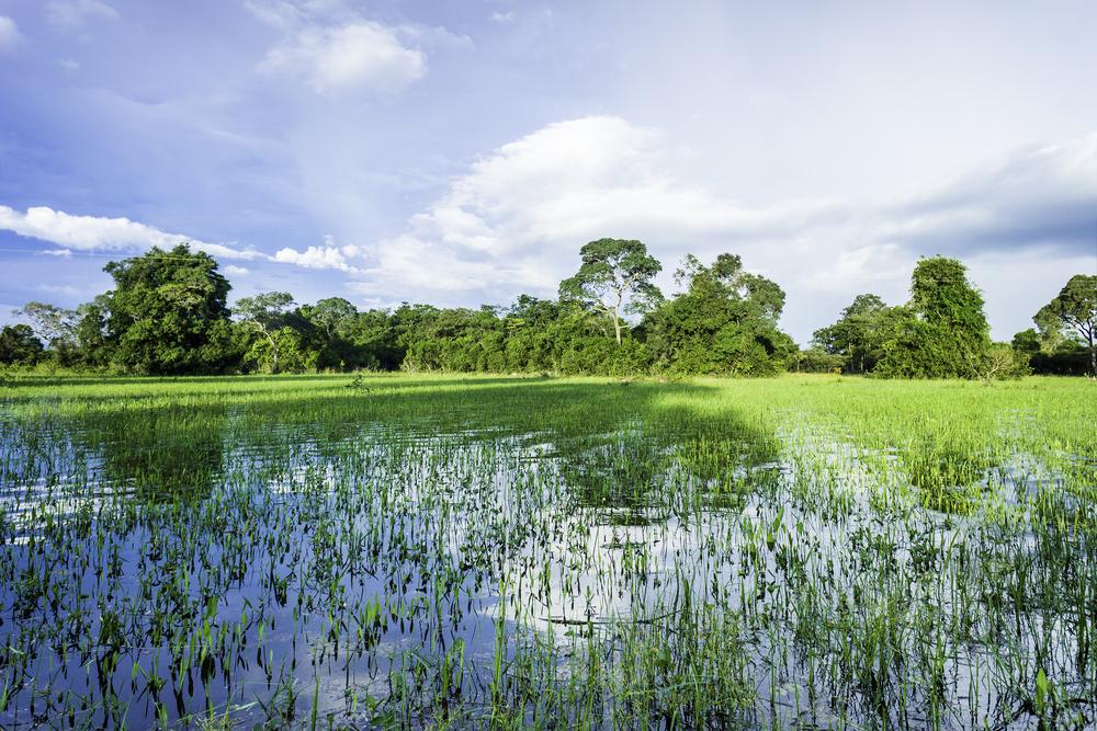 Wetlands Responsible for Methane Spike in 2014