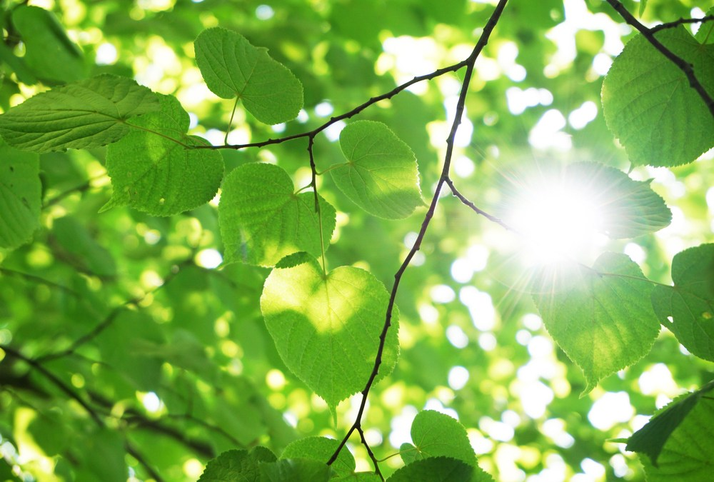 More Carbon Dioxide Means More Photosynthesis