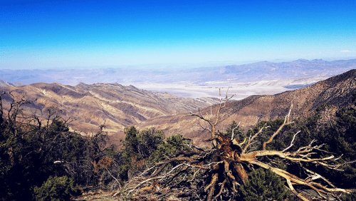 There are now more than 100 million dead trees in California, due in large part to drought.