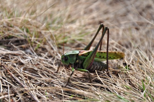 Eating bugs is a more sustainable way to get protein than eating meat.