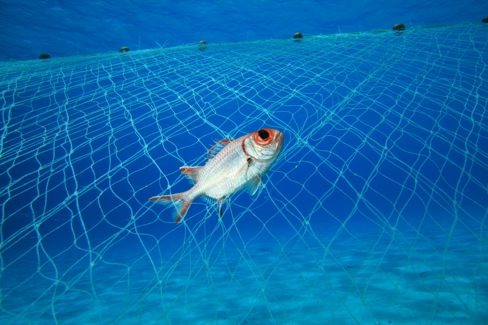 Senate Passes Bill to Outlaw Drift Gillnets