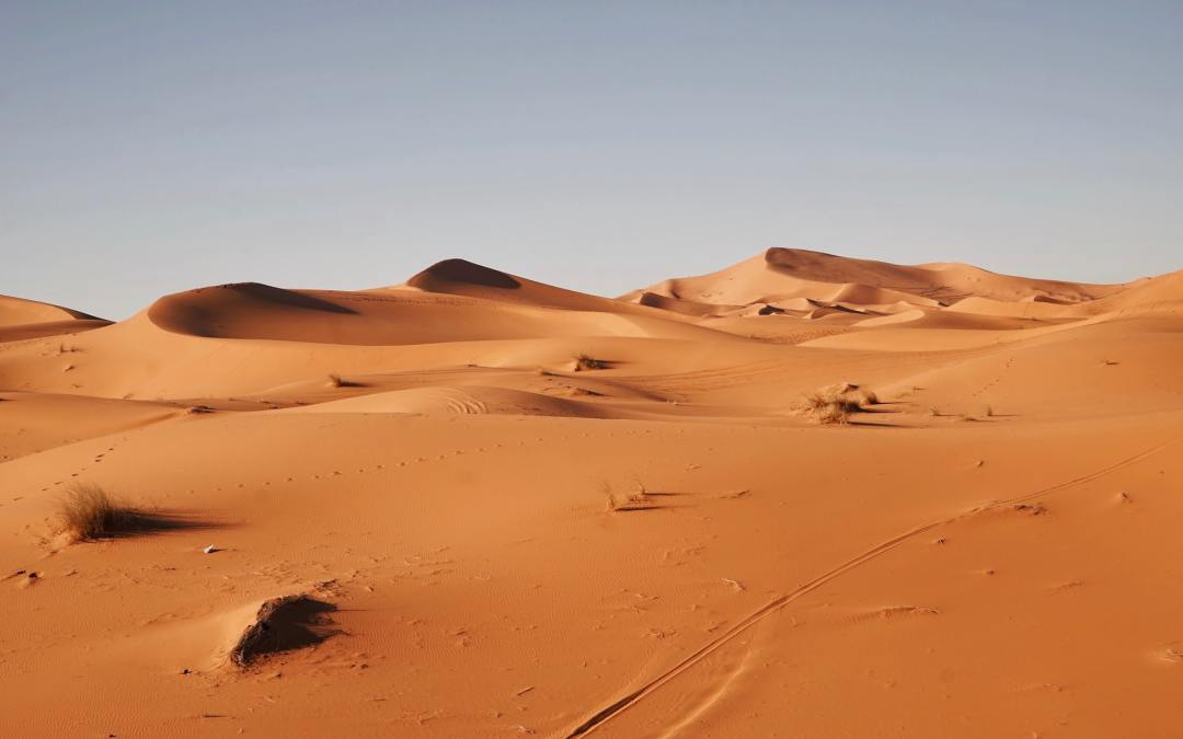 The Great Green Wall is the largest conservation effort in the world