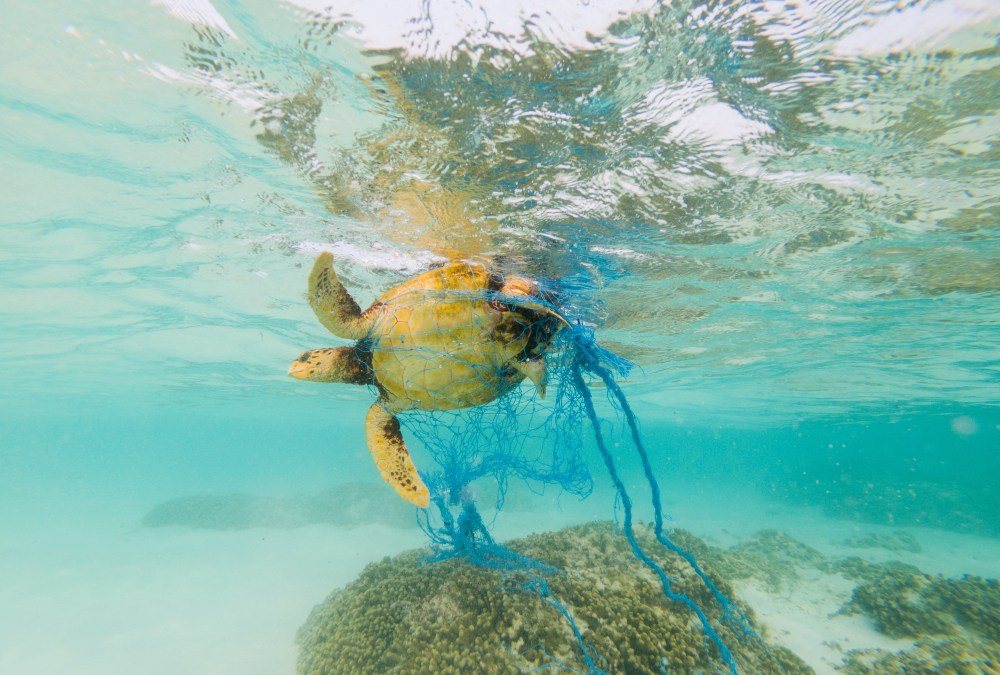 Ghost Nets Threaten Sea Life in Hawaii