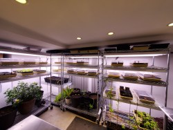 A functional basement grow room system in Santa Fe