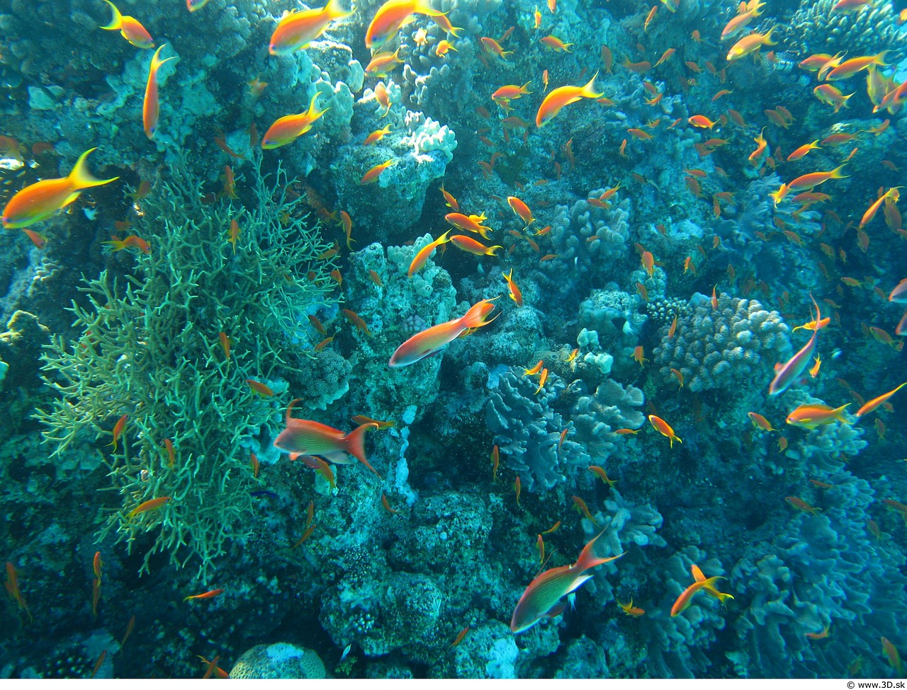 Warming Ocean Waters How It Impacts Fish And Marine Life
