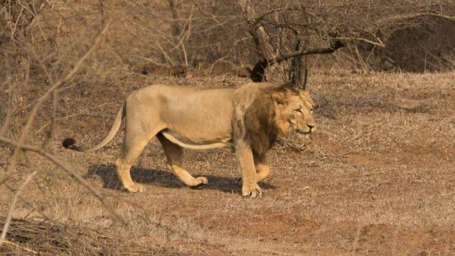 endangered-species-in-india