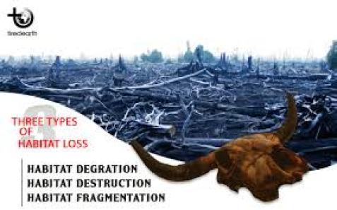 loss-of-habitat-negative-effects-of-volcanoes
