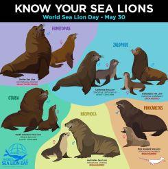 sea-lion-endangered-marine-animals