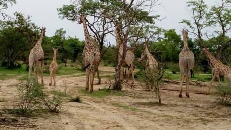 yankari-game-reserve-historical-tourist-sites-in-nigeria