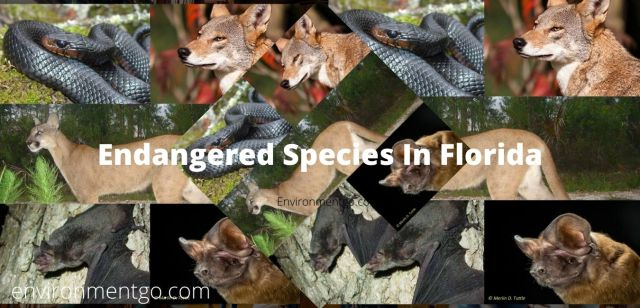 Top 7 Most Endangered Species in Florida