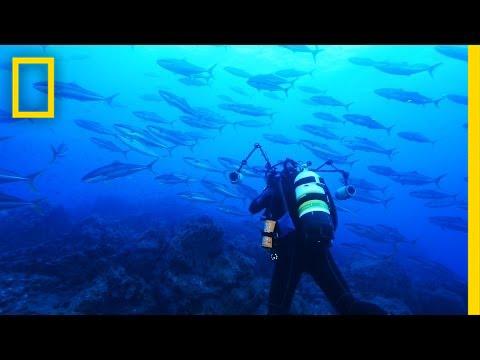 Announcement: Chile Creates Enormous Ocean Preserve   National Geographic