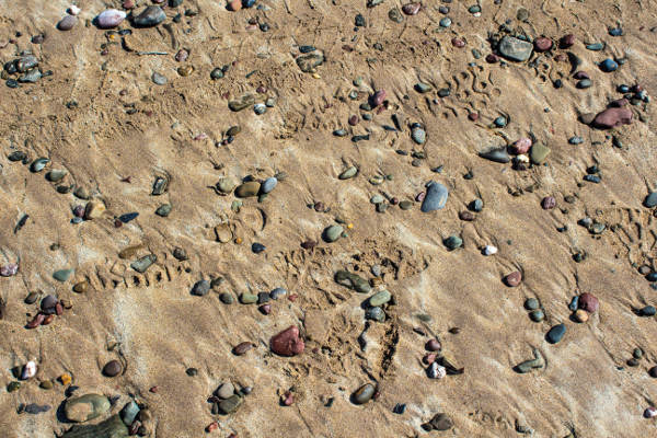 golden sand and coloured stones on a beach