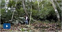 Expedición Antioquia: diversidad, dinámica y productividad de los bosques de Antioquia